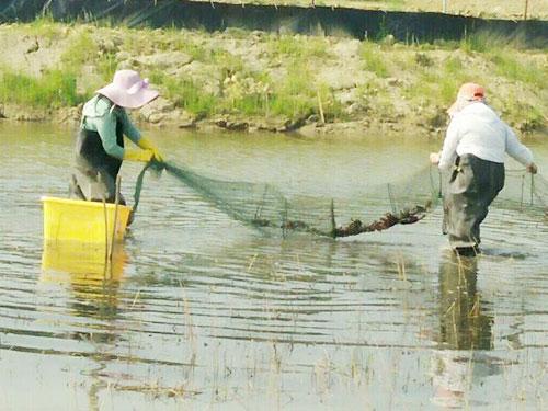 邵陽市厚土生態農業有限公司,邵陽大米銷售,稻香魚銷售,稻田蝦哪里好